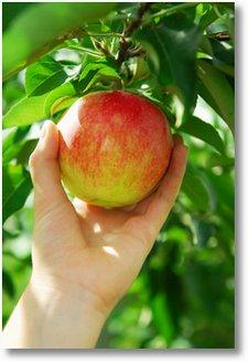 Topinambur! TopinamWAS? « Saft, Fruchtsaft und Fruchtnektar